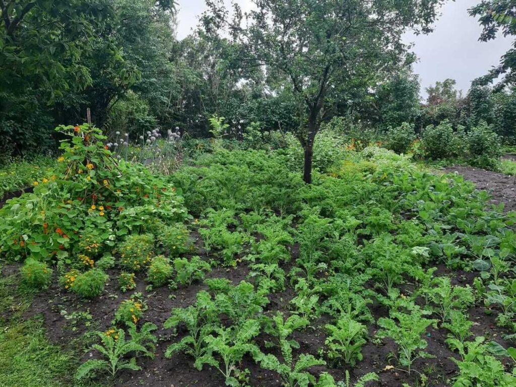Unser Garten in Keitum