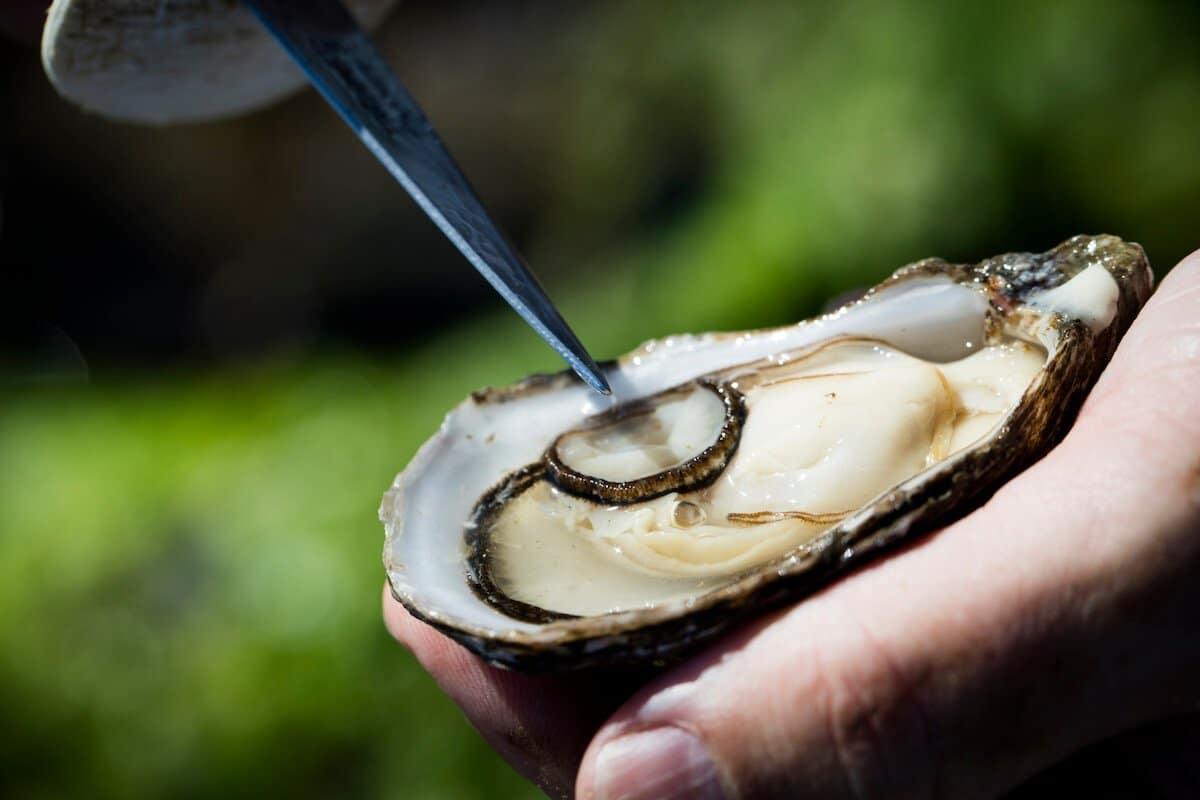 Austern- und Kräuterexkursionen 2020